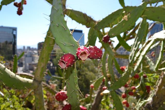 Free cerro santa lucia santiago cactus flower