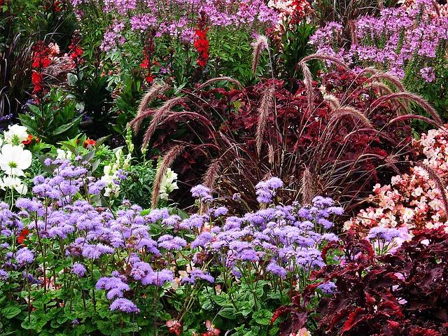 Free phlox lobelia discounts tiresome flowers bed