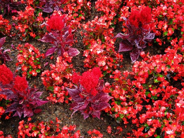 Free zinnia salvia discounts tiresome flowers bed