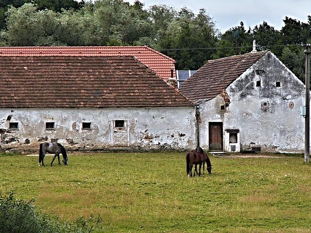 Free horses animal horse homestead range