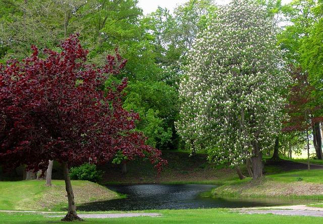 Free netherlands landscape trees blooms park grass