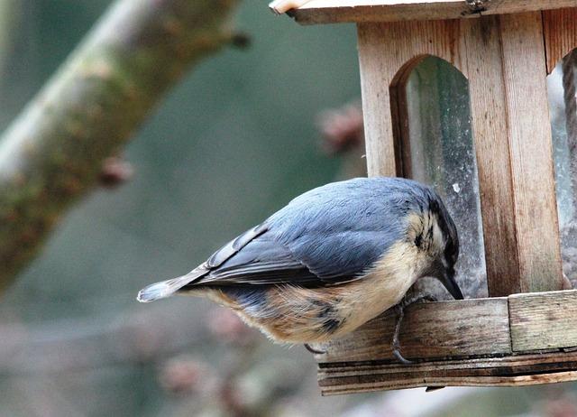 Free kleiber bird animal bill feather red brown
