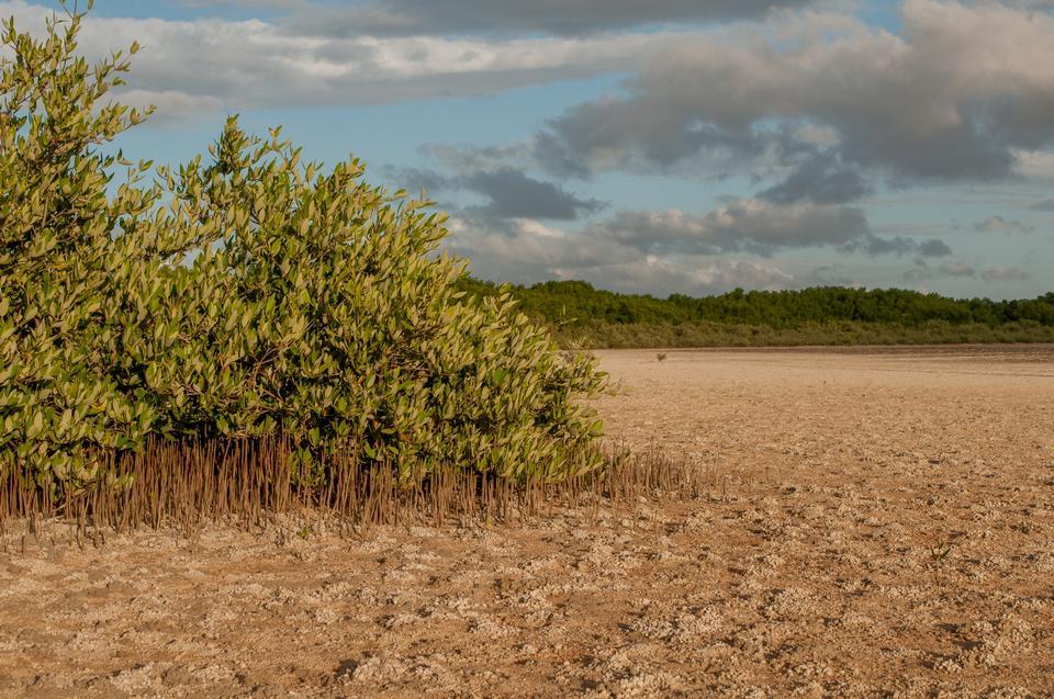 Free Saline in La Restinga Lagoon, Margarita island