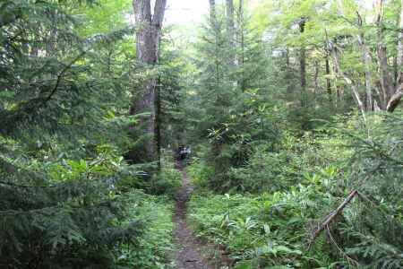Free lush rainforest path Rohrbaugh Plains in West Virginia