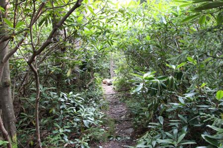 Free Hiking trail in fir forest, Rohrbaugh Plains in West Virginia