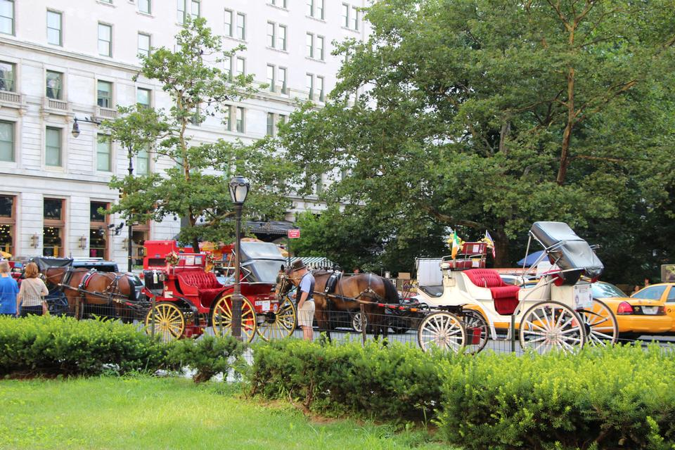 Free Horse and carriage at Central Park, New York City