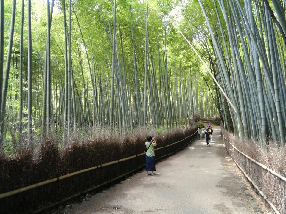 Free Bamboo Forest in Japan, Arashiyama, Kyoto