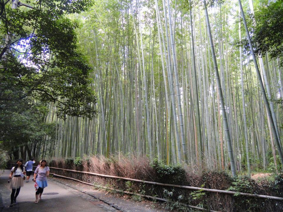 Free Sagano bamboo forest, Kyoto, Japan