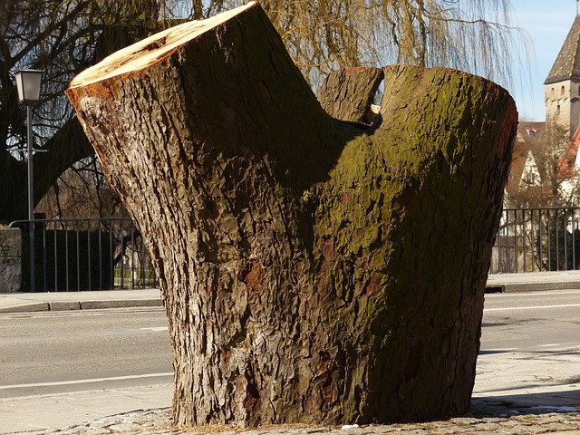 Free tree tree stump sawed off broken dead wood