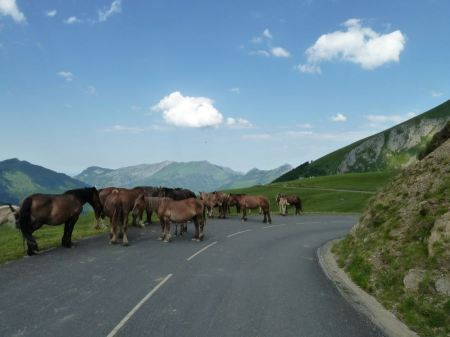 Free Wild Horses in the High Mountains of the Col De Soulor