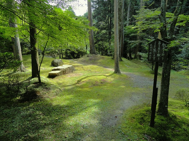 Free otsu japan landscape forest trees woods stones