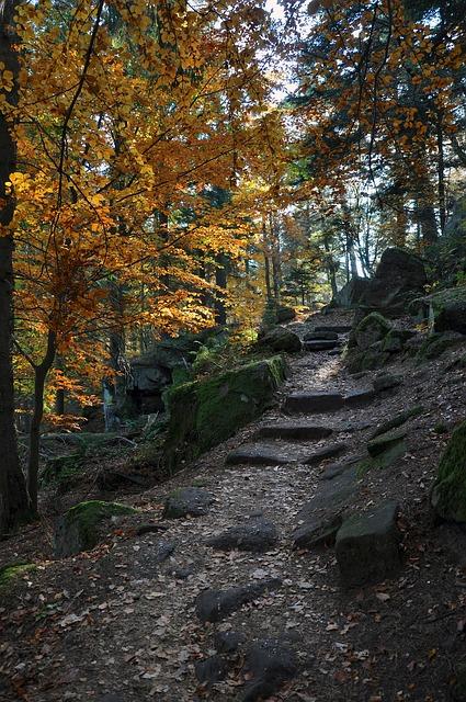 Free france landscape steps stones slope forest trees