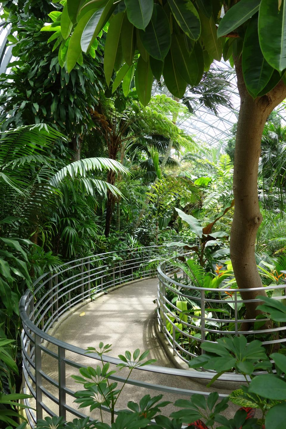 Free Rain forest