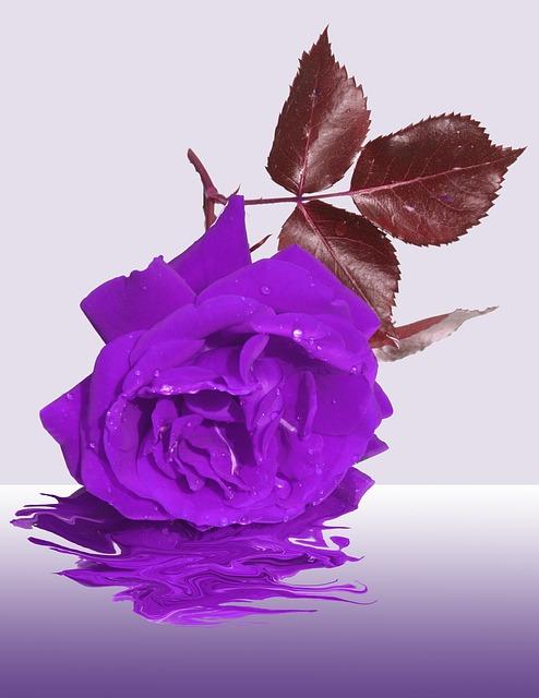 Free mourning flower memory condolences rose purple