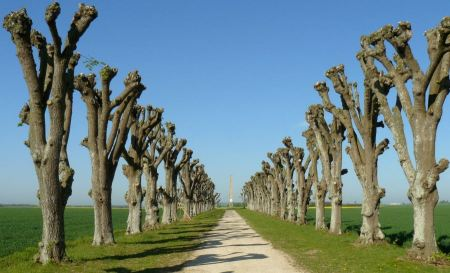 Free summer, with rows of trees