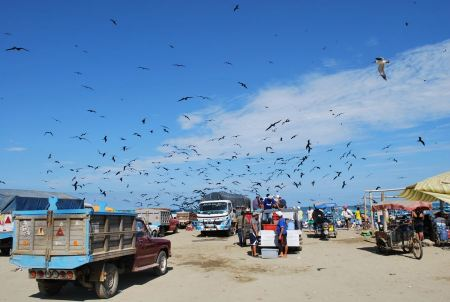Free fisherman in Puerto López, Manabí Province