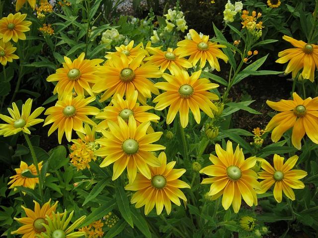 Free sunflower flowers blütenmeer bed discounts