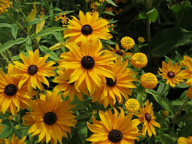 Free sunflower flowers blütenmeer bed discounts