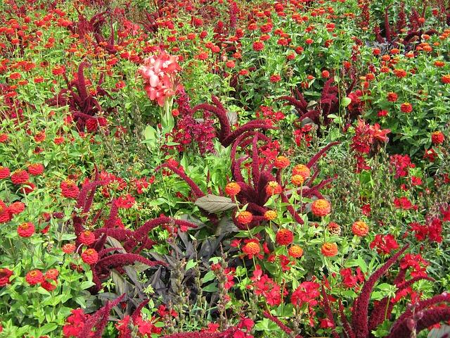 Free zinnia salvia foxtail flowers blütenmeer bed