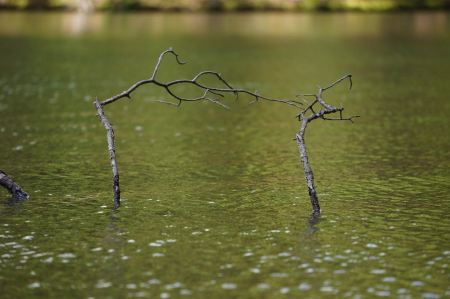 Free old tree that sank in lake
