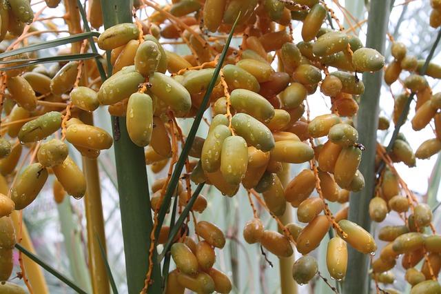 Free drop fruit tree