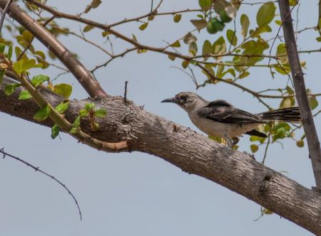 Free bird on a branch