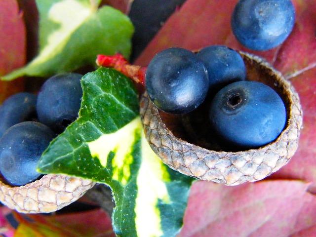 Free berries blue autumn macro ivy decoration