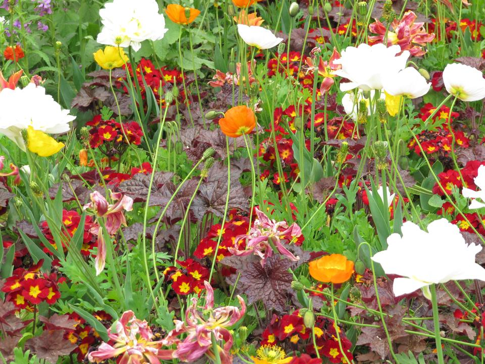 Free Blossoming flowerbeds in the park