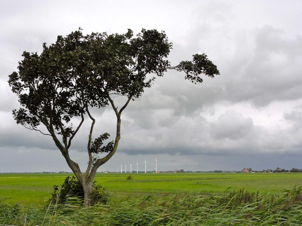 Free Wind turbines in Frisian countryside, Netherlands