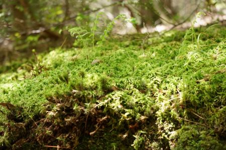 Free a tree stump covered with moss