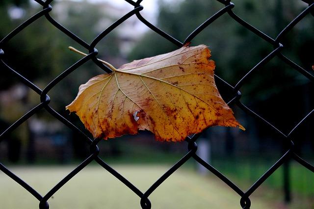 Free dry leaf aurunno winter leaf autumn brown leaf