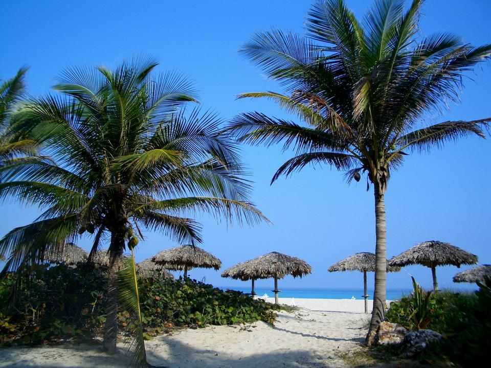 Free View of Varadero beach in Cuba with a coconut tree