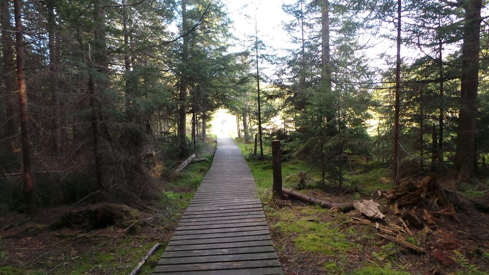Free wooden walk way through the forest
