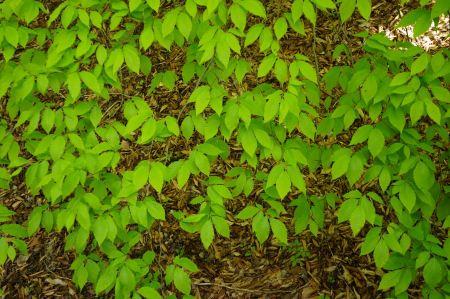 Free green leaf