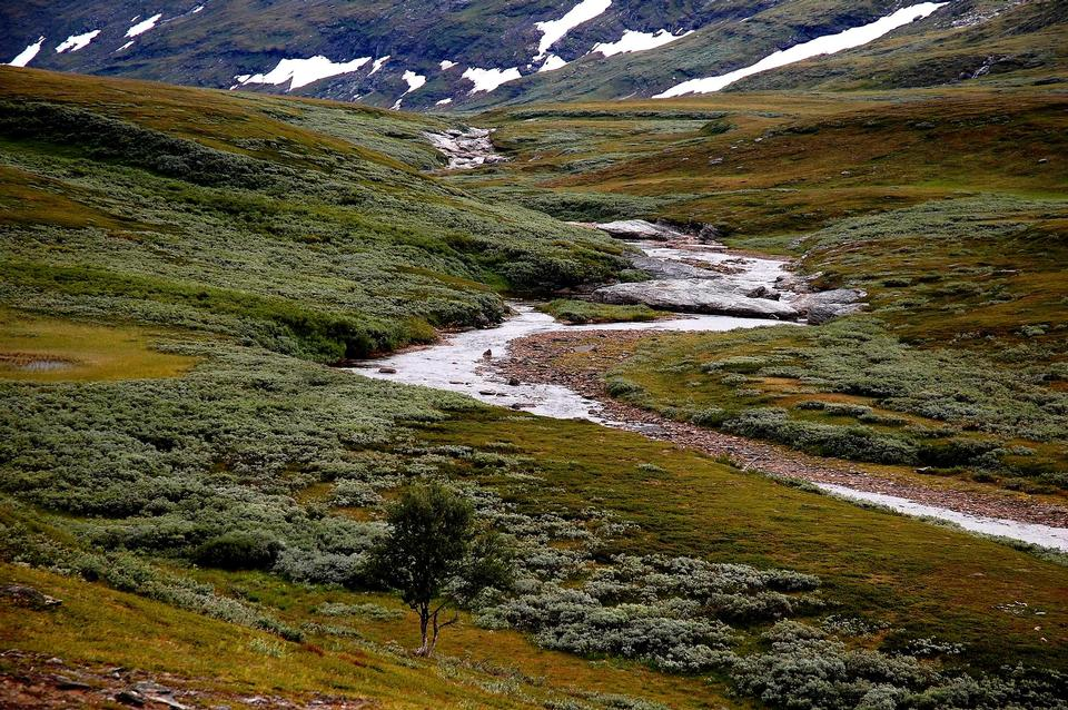 Free Stream at the Padjelanta National Park, UNESCO World Heritage