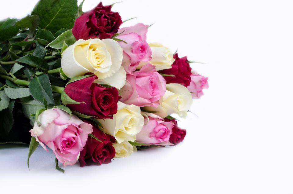 Free Tender pink roses isolated on white