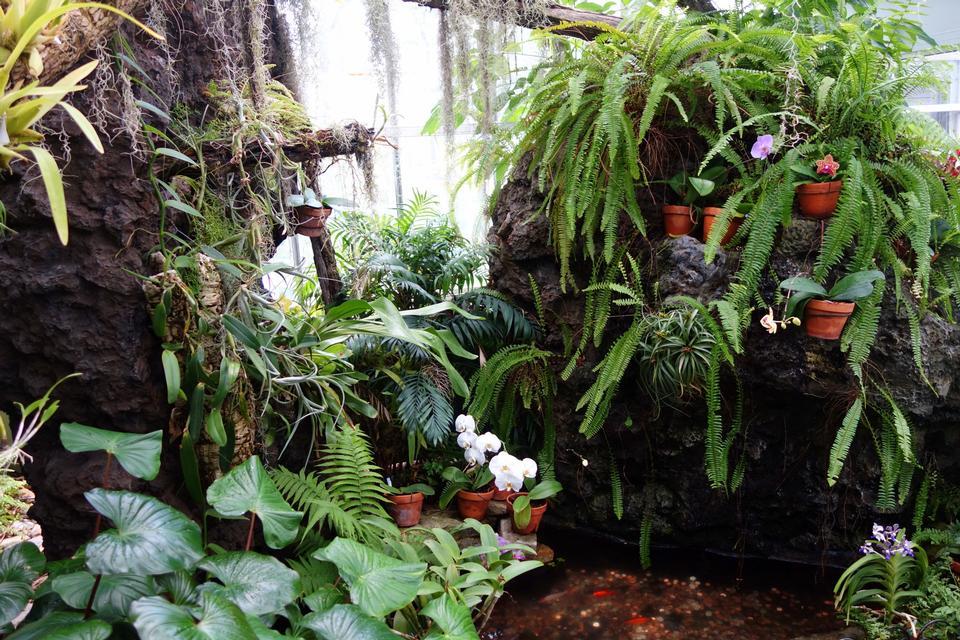 Free Orchid plant nursery