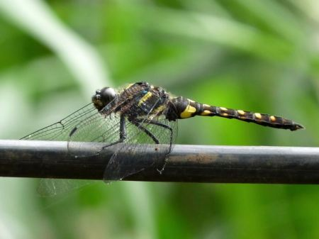 Free Dragonfly on a branch