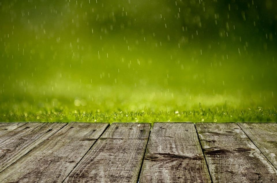 Free Photos: Lush green grass with falling drops | wildfly