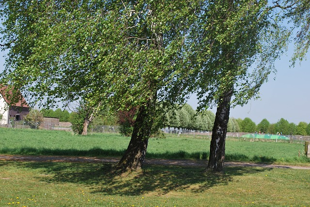 Free Photos: Landscape trees shrubs green grove nature tree | Hannelore Louis