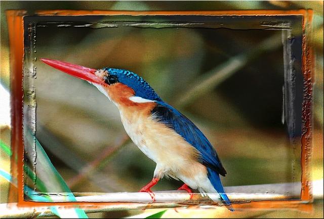 Free colorful bird animal namibia africa feathered
