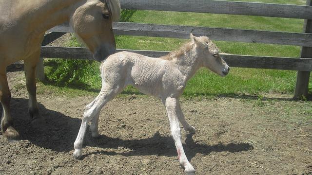 Free newborn filly horse