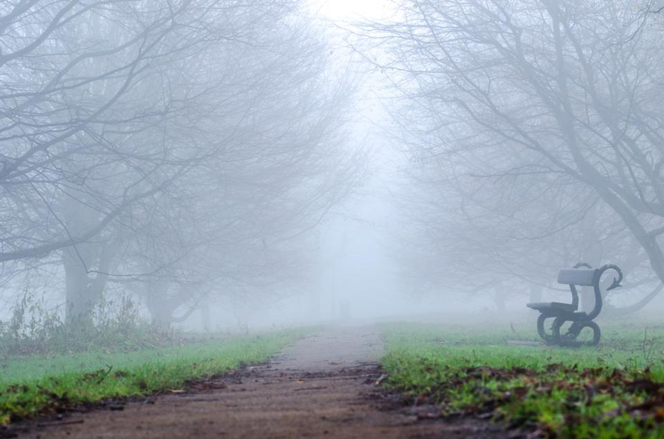 Free bench and tunnel between trees in dense fog