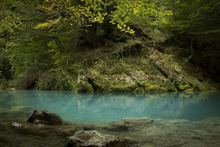 Free Old beech and river.Beautiful blue waters.