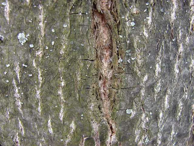 Free tree bark wood tree bark trees forest nature