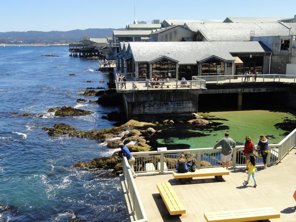 Free Monterey Bay Aquarium, Monterey California