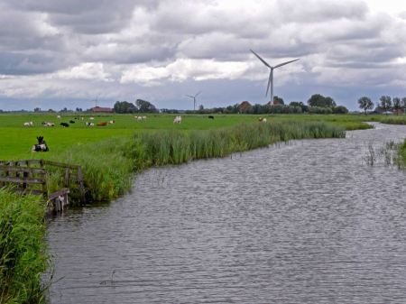 Free cow on pasture in river Netherlands