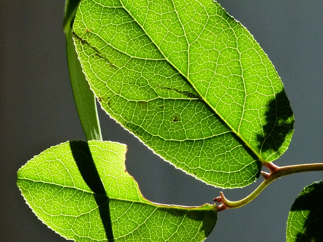 Free leaves backlight green nature plants macro