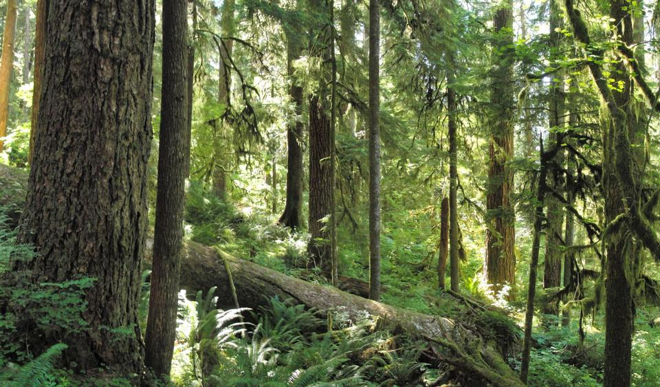 Free Forest on Olympic National Park