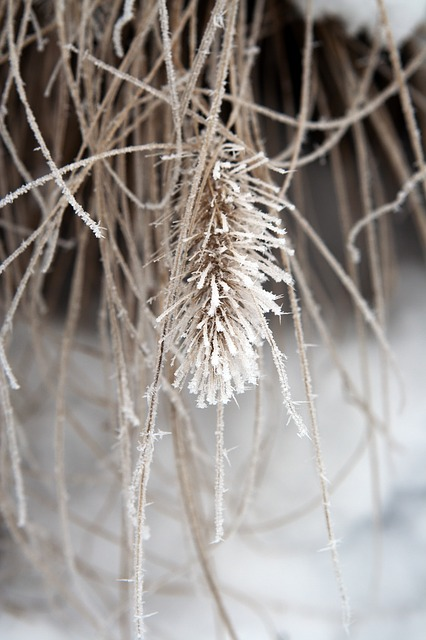 Free plant frozen ice winter